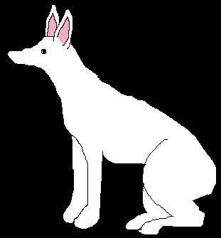 attempt at drawing a dog